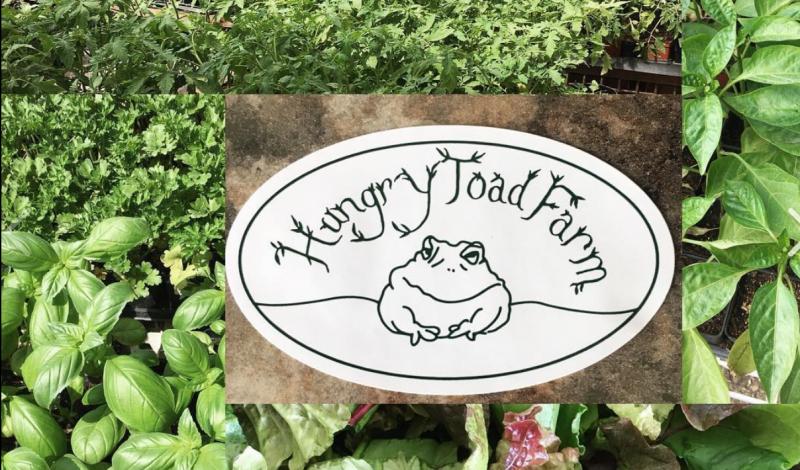 Vendor Spotlight: Hungry Toad Farm